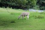 Bergtierpark-Erlenbach-www.michael-floessel.de-00010