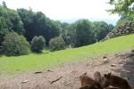 Bergtierpark-Erlenbach-www.michael-floessel.de-00014